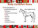 body condition score