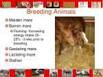 breeding animals