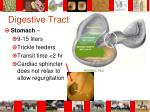 digestive tract6