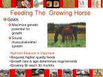 feeding the growing horse