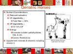 geriatric horses