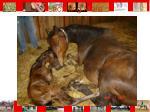 lactating mare