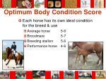 optimum body condition score