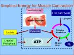 simplified energy for muscle contraction