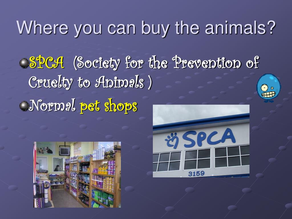 Where you can buy the animals?