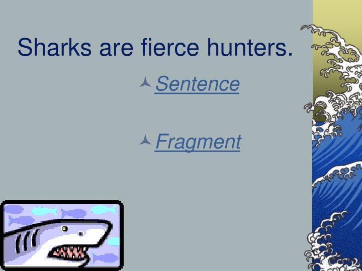 Sharks are fierce hunters