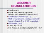 wegener granulamotozu36