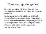 common reporter genes