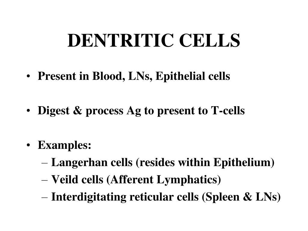 DENTRITIC CELLS