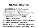 granulocytes15