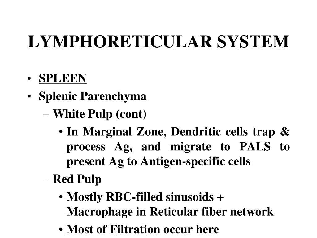 LYMPHORETICULAR SYSTEM