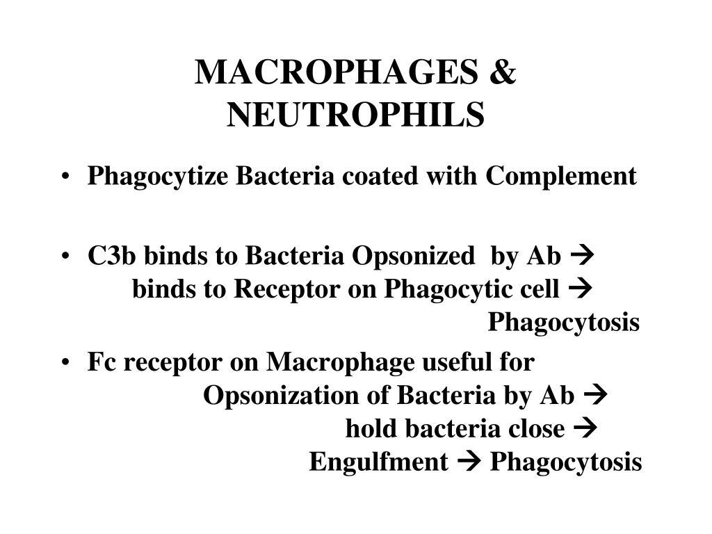 MACROPHAGES & NEUTROPHILS