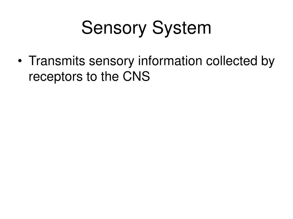 sensory system l.