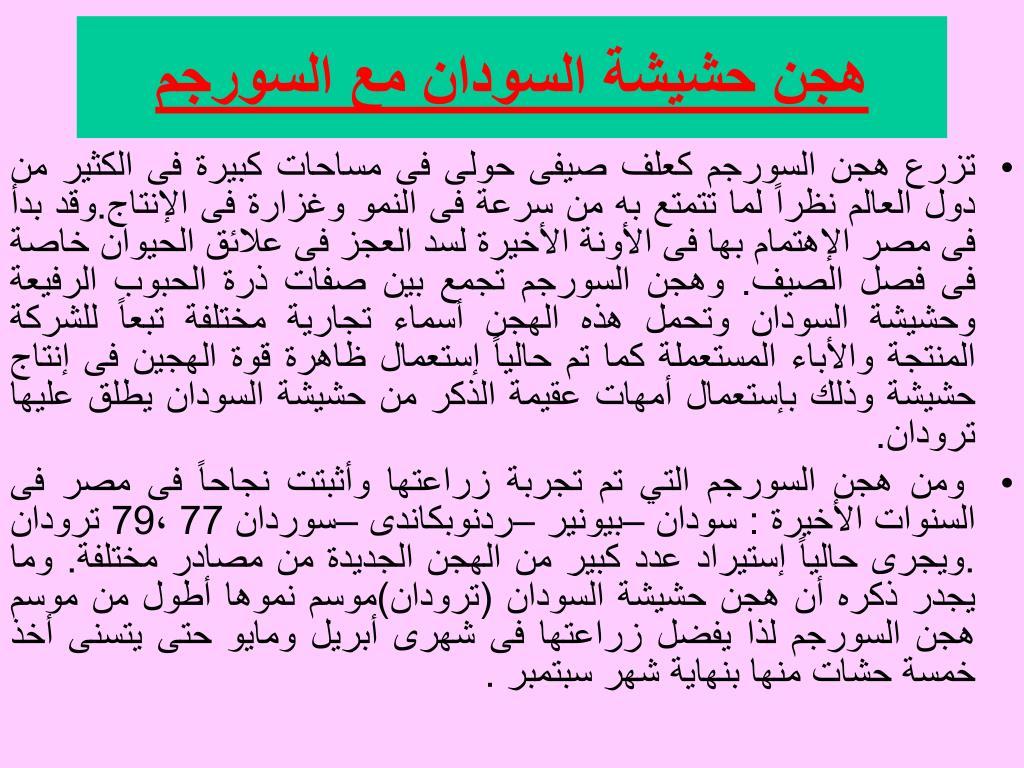 هجن حشيشة السودان مع السورجم