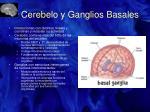 cerebelo y ganglios basales