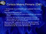 corteza motora primaria cm1