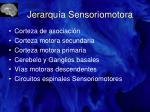 jerarqu a sensoriomotora