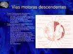 vias motoras descendentes