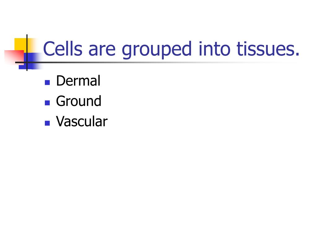 Cells are grouped into tissues.