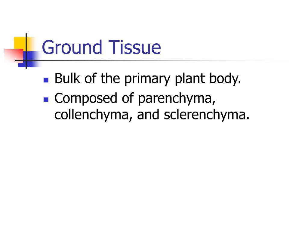 Ground Tissue
