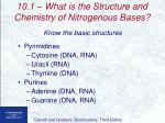 10 1 what is the structure and chemistry of nitrogenous bases