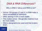 dna rna differences33