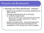 neisseria and branhamella22