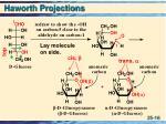 haworth projections16
