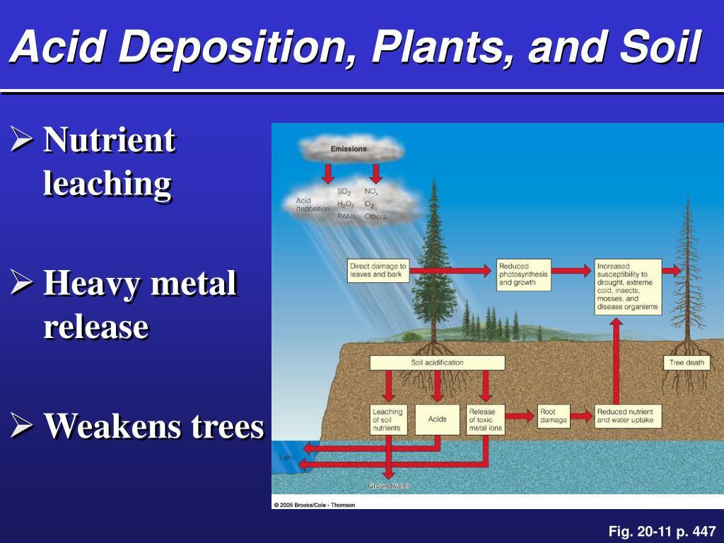 Acid Deposition, Plants, and Soil