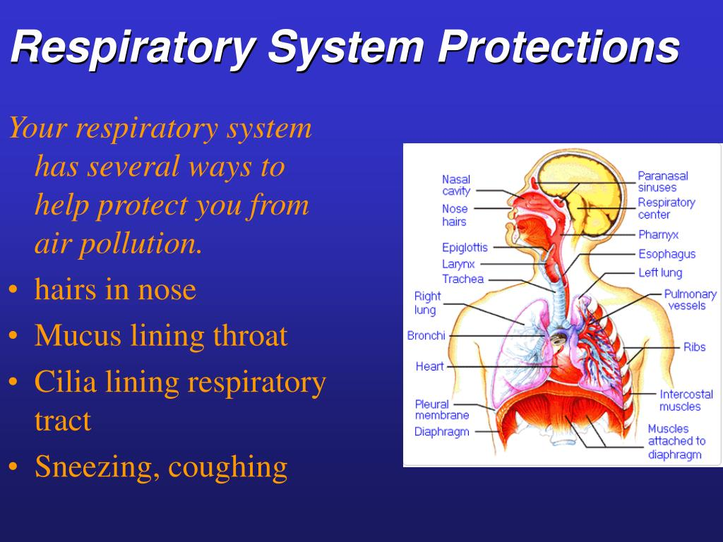Respiratory System Protections