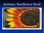achene sunflower seed