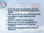 mandibular molars