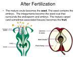 after fertilization