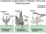 comparison of generations in mosses ferns and flowering plants