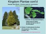 kingdom plantae cont d25