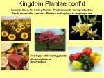 kingdom plantae cont d26