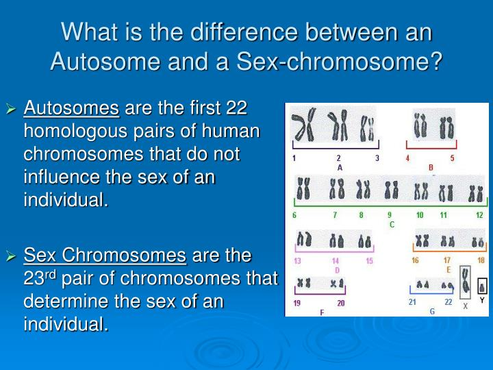 Autosomes between chromosomes difference sex