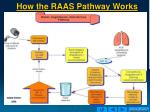 how the raas pathway works