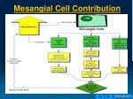 mesangial cell contribution