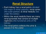 renal structure