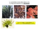 6 los seres vivos m s sencillos 1b algas pluricelulares en la intermareal