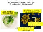 6 los seres vivos m s sencillos 2 las bacterias c mo se nutren
