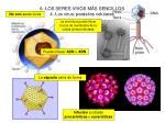 6 los seres vivos m s sencillos 4 los virus par sitos celulares
