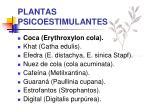 plantas psicoestimulantes