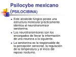 psilocybe mexicano psilocibina