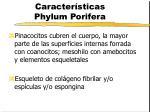 caracter sticas phylum porifera9