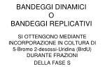 bandeggi dinamici o bandeggi replicativi
