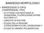 bandeggi morfologici