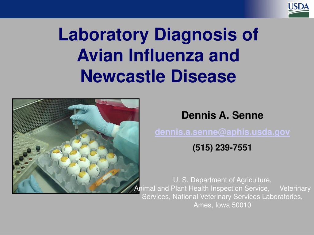 laboratory diagnosis of avian influenza and newcastle disease l.