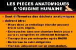 les pieces anatomiques d origine humaine
